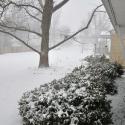 No-Knead Cinnamon Raisin Swirl Bread and SnOMG it's a SNOWmageddon!