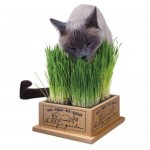 Kitty Edible Garden Planter