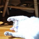 A Proper Sun Cat