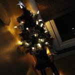Oh Christmas Shrub, Oh Christmas Shrub,…