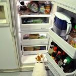 Paleo Update: The Refrigerator